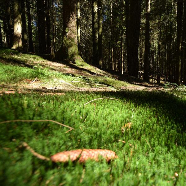 Attività esperienziali nei boschi