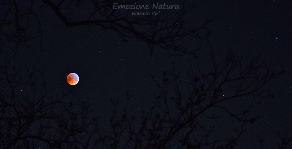 Eclisse totale di Luna fra i rami di un albero