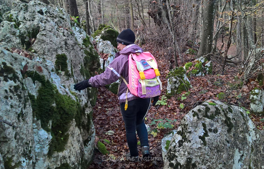 Scoprire la natura nel bosco