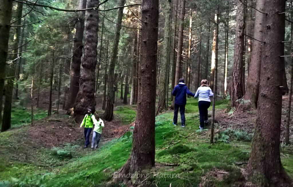 Esperienze nel bosco