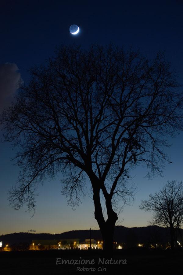 L'albero e la Luna