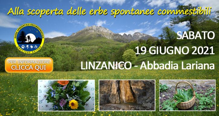 Workshop sulle erbe spontanee commestibili e tossiche
